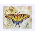06130 Пеперуда с паспарту